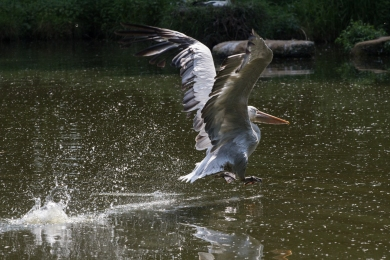 (Not so) graceful landing