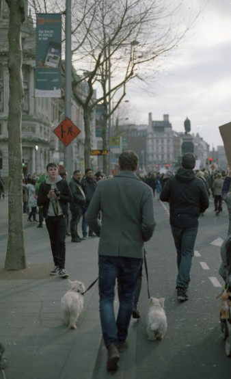 Marching dogs Canon FTb - Kodak Gold 100 (Expired 2004)