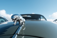Actual Jaguar